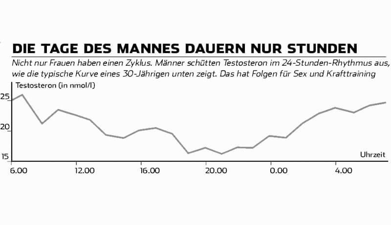 Diagramm: Testosteronspiegel über den Tag verteilt