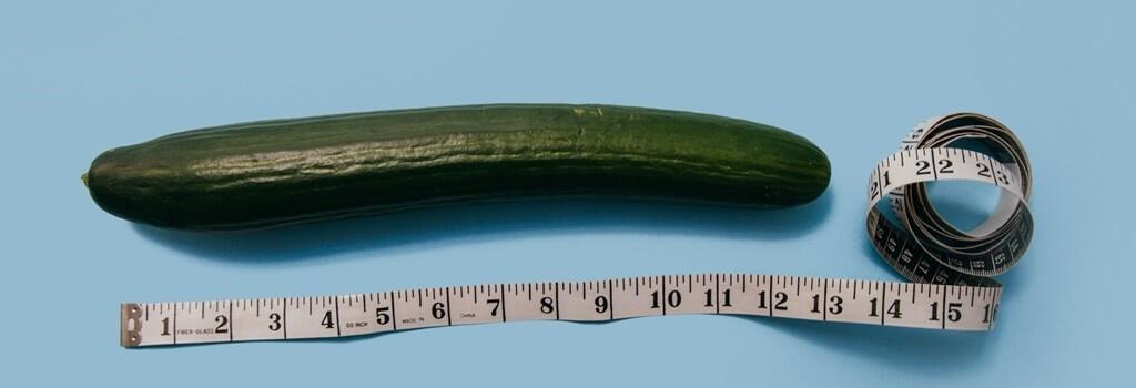 Die durschnittliche Länge des Penis